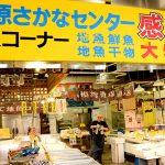 【小田原さかなセンター】小田原漁港のすぐとなりにある市場